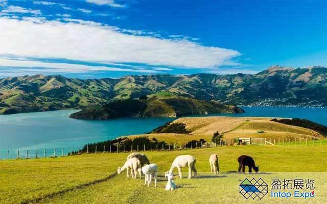 新西兰签证,新西兰旅游签证.jpg