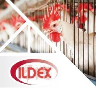 印尼雅加达国际家禽畜牧产业博览会logo